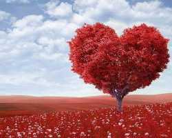 Как понять девушке, что она влюбилась