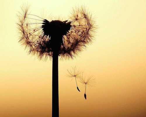 Частые причины расставаний: почему мужчина ушел к другой. Что делать и как себя вести. 7 советов психолога