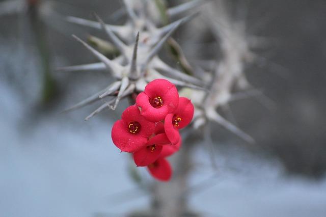 Цветы и шипы