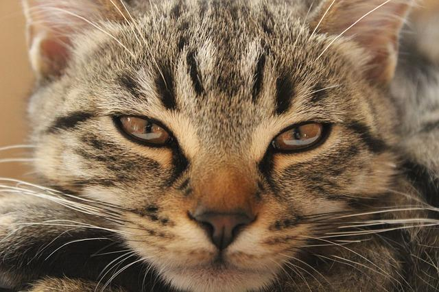 Скучающий кот
