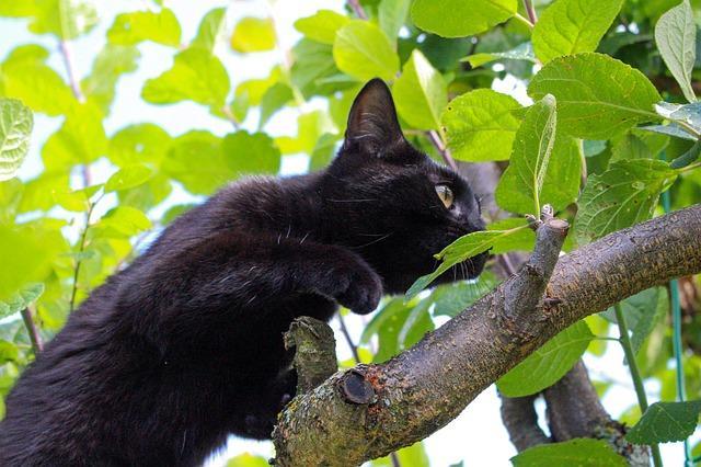 Кот выслеживает
