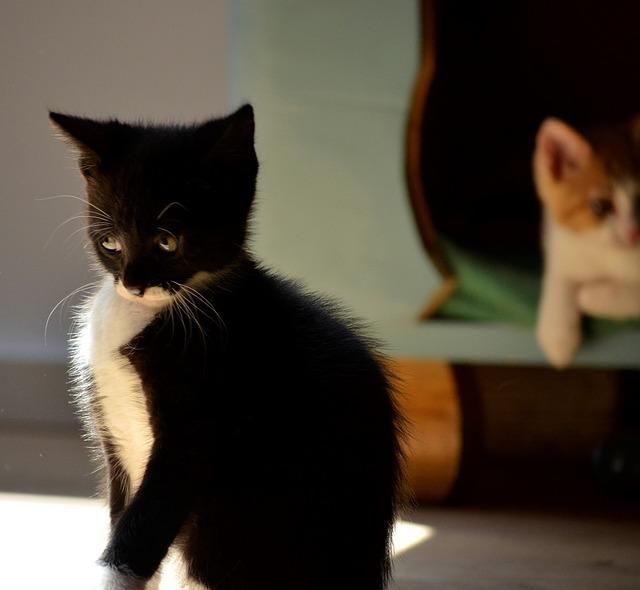 Кошка виновата