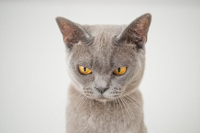 Обиженная кошка