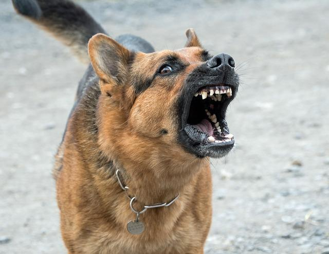 Агрессивная злая собака