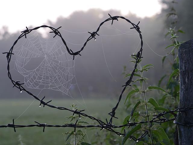 Сердце из колючей проволоки