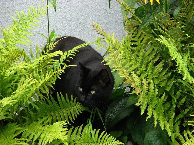 Чёрный кот в засаде