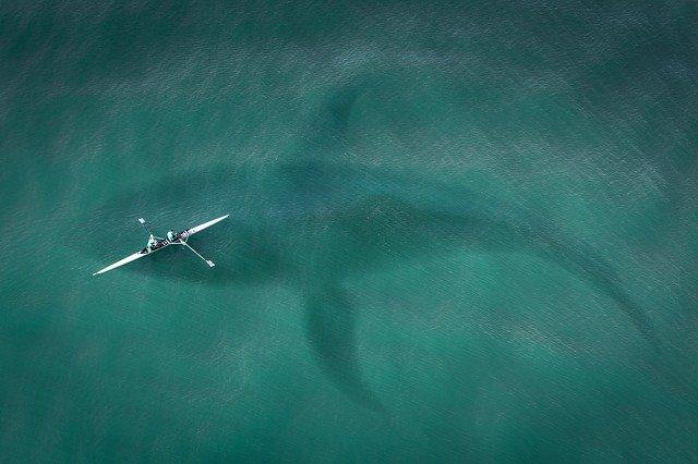 Лодка и огромная акула