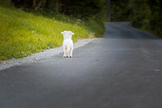 Собачка на дороге