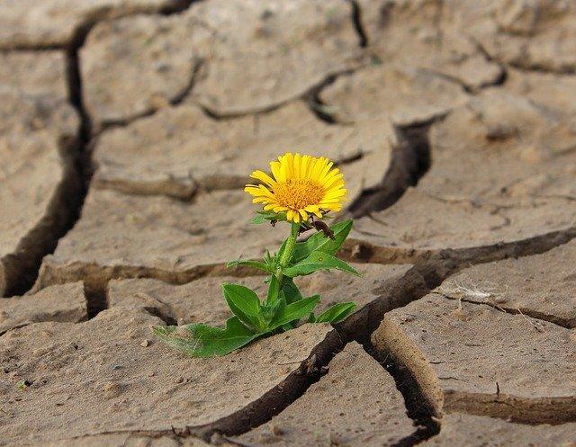 Цветок пророс на сухой земле