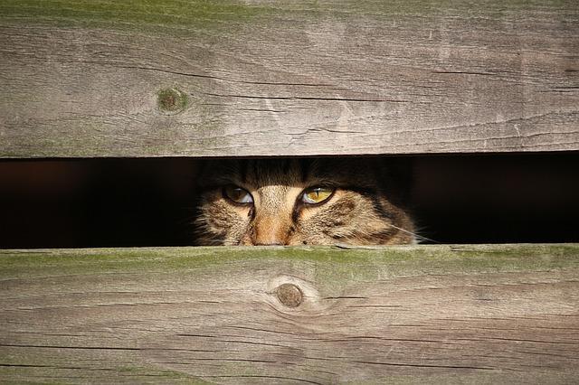 Кот затаился